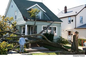 tree-down-in-yard